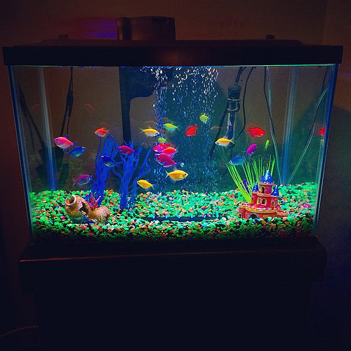 Preparing To Move Your Tropical Fish?   Moving Company In Toronto
